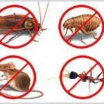 شركة رش مبيدات بمحايل عسير -0552378240