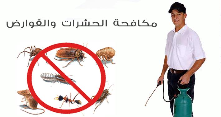 شركة مكافحة حشرات بمحايل عسير-0536289213