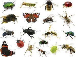 شركة مكافحة حشرات ببيشه-0552378240
