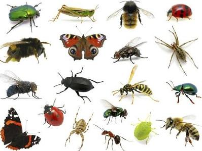 شركة مكافحة حشرات ببيشه-0536289213